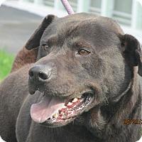 Adopt A Pet :: Gunner - Richfield, WI