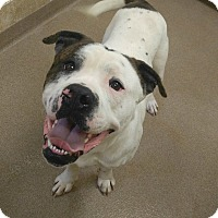 Adopt A Pet :: 1-8 - Triadelphia, WV