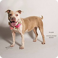 Adopt A Pet :: KENNEL 8 - Corona, CA