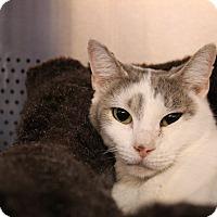Adopt A Pet :: Oprah - Sarasota, FL