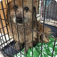 Adopt A Pet :: Davina - Newport, KY