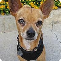 Adopt A Pet :: Buddy - Van Nuys, CA