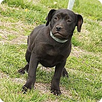 Adopt A Pet :: Shadow $300 adoption fee - Ocala, FL