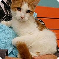 Adopt A Pet :: Archie - Reston, VA