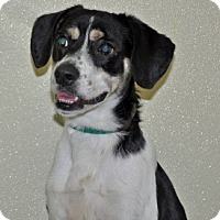 Adopt A Pet :: Oreo - Port Washington, NY