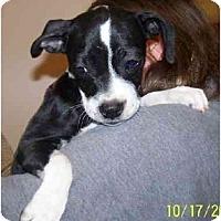 Adopt A Pet :: Sneak Preview - Wakefield, RI