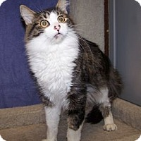 Adopt A Pet :: K-Abigail-Quincy - Colorado Springs, CO