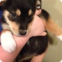 Adopt A Pet :: Gracie - Saskatoon, SK