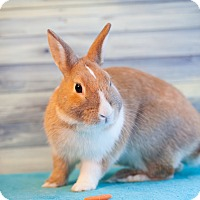Adopt A Pet :: Superbun - Los Angeles, CA