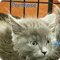 Adopt A Pet :: Porthos - McDonough, GA