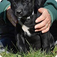 Adopt A Pet :: Kumara - Pleasant Plain, OH