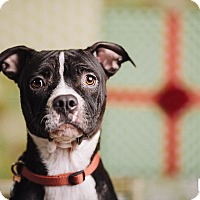 Adopt A Pet :: Bugs - Portland, OR
