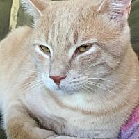 Adopt A Pet :: Sunny Delight - New City, NY