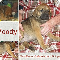 Adopt A Pet :: Woody meet me 1/22 - Manchester, CT