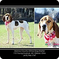Adopt A Pet :: Marge - Mt. Gilead, OH