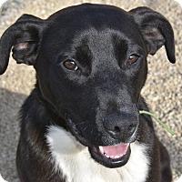 Adopt A Pet :: Hank - Meridian, ID
