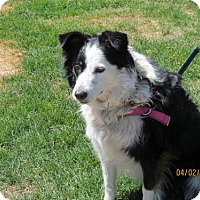 Adopt A Pet :: Bailey - Arvada, CO