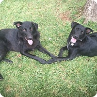 Adopt A Pet :: Delson (Bonded Pair with Timber) - Frederick, MD