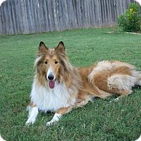 Adopt A Pet :: Toby - Sugar Land, TX