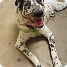Adopt A Pet :: Spots