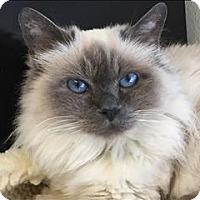 Adopt A Pet :: Eileen - Sherwood, OR