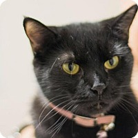 Adopt A Pet :: PEARL - Waterford, VA