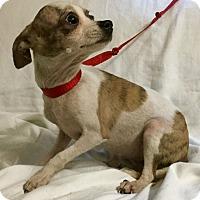 Adopt A Pet :: Pebbles - Phoenix, AZ