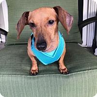 Adopt A Pet :: Dory - Weston, FL