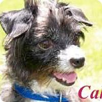 Adopt A Pet :: Cali - El Cajon, CA
