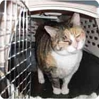 Adopt A Pet :: Sissy - Hamburg, NY