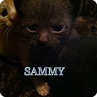 Adopt A Pet :: Sammy - Union, KY