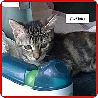 Adopt A Pet :: Torbie - Miami, FL