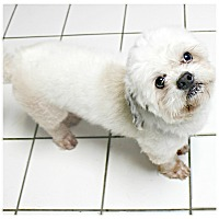 Adopt A Pet :: Grady - Forked River, NJ