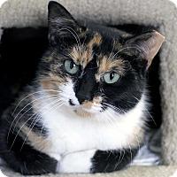 Adopt A Pet :: Adder - Chicago, IL