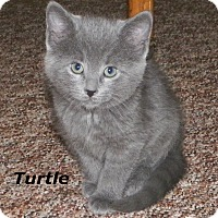 Adopt A Pet :: Turtle - Dover, OH