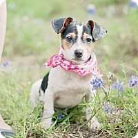 Adopt A Pet :: Whitney - Houston, TX