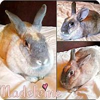 Adopt A Pet :: Madeleine - Los Angeles, CA