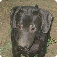 Adopt A Pet :: Jacko - Portland, ME