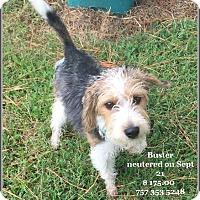 Adopt A Pet :: Buster - Hampton, VA