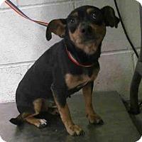 Adopt A Pet :: TESSA - Conroe, TX