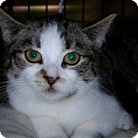 Adopt A Pet :: Missy - Forest Hills, NY