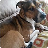 Adopt A Pet :: Marci (ETAA) - Allentown, PA
