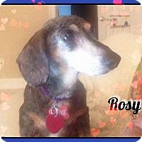 Adopt A Pet :: Rosy - Green Cove Springs, FL