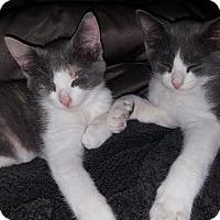 Adopt A Pet :: Walker - Cherry Hill, NJ