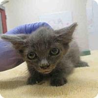 Adopt A Pet :: JERRY - Carlsbad, CA