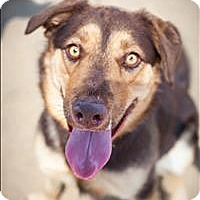 Adopt A Pet :: Hazel - Riverside, CA