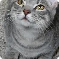 Adopt A Pet :: Cercei - Columbus, OH