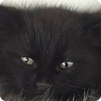 Adopt A Pet :: Xerox - Divide, CO
