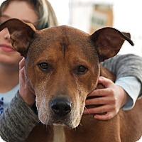 Hound (Unknown Type) Mix Dog for adoption in LaGrange, Kentucky - Bones