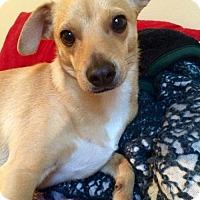 Adopt A Pet :: Lenny - Royal Palm Beach, FL
